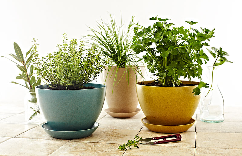 herbs, indoor, potted herbs, vegetarian times, food photographer, crystal cartier