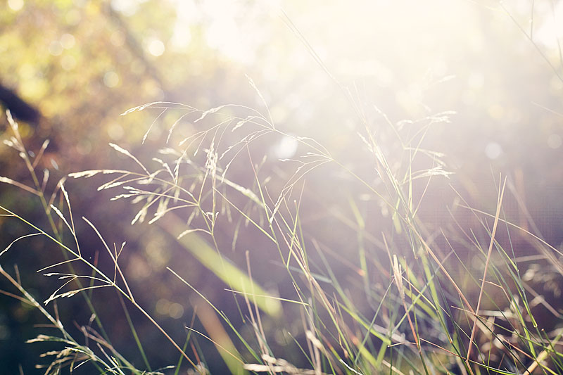 lifestyle photography, nature, sunny, lifestyle photographer, grasses, field, hike, crystal cartier, los angeles