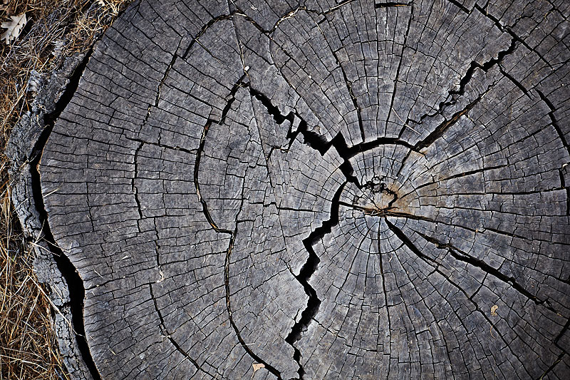 lifestyle photography, nature, sunny, lifestyle photographer, tree stump, hike, crystal cartier, los angeles