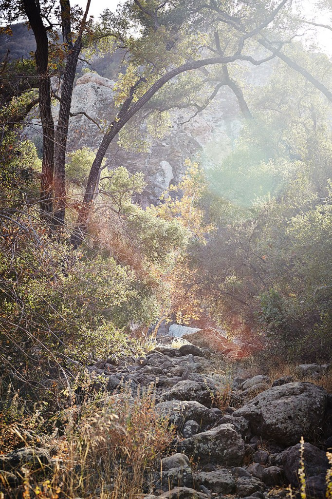 lifestyle photography, nature, sunny, lifestyle photographer, trees, river, hike, crystal cartier, los angeles