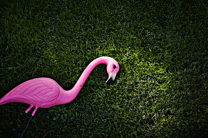 pink flamingo, grass, lifestyle photography, crystal cartier, los angeles